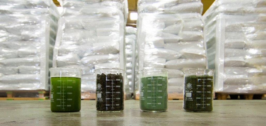 Algae Stages